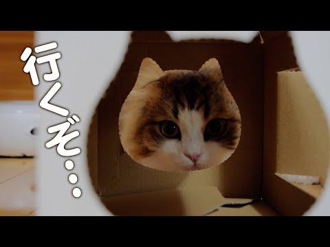 小さすぎる猫型食パンハウスに突っ込む猫