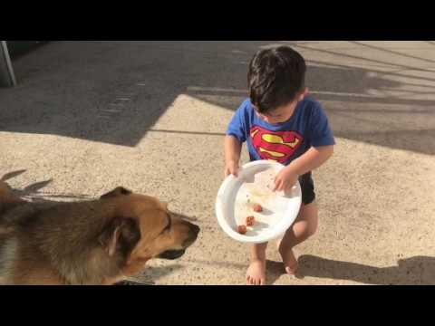 Judah and Dog toddlers playing and feeding dog. Children interact with dog. Summer fun. Holiday mode