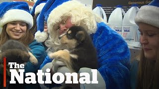 Repeat youtube video WestJet Christmas Miracles Campaign | Emotional Ads