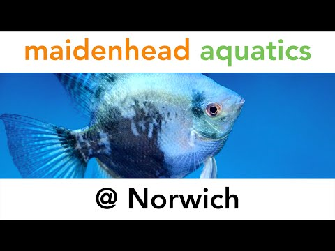 Maidenhead Aquatics @ Norwich