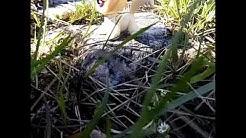 Soturi kissat villiin luontoon 2