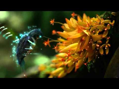 обои цветы колибри
