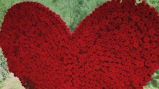 10 000 роз на свадьбе, океан цветов