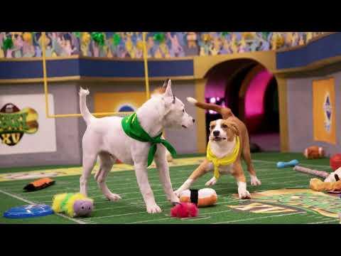 Puppy Bowl XV MVP: Bumble