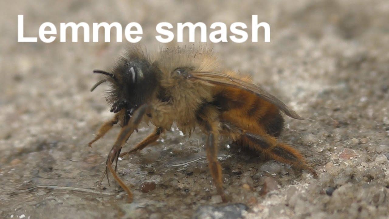 Lemme smash Bee version (Original) - YouTube