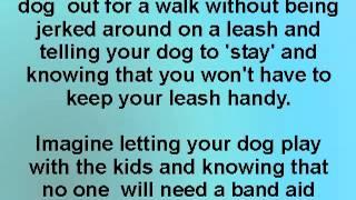 Golden Retriever Puppy Specialists Training Videos Introduction - D's Golden Delights