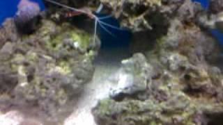 20 Gallon Nano Reef And 165 Gallon Reef Tank Build #1