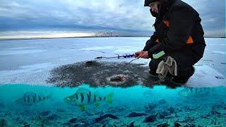 Полосатый ходит подо льдом стаями Зимняя рыбалка на окуня