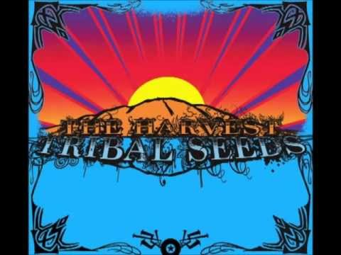 Tribal Seeds - Stillness Of Night