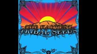 Tribal Seeds - Stillness Of Night