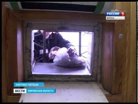 Кирово-Чепецкая ИК-11 (ГТРК Вятка)