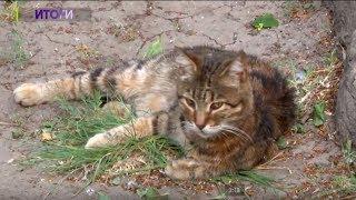Одесские живодёры брали котят в «добрые руки», калечили и убивали