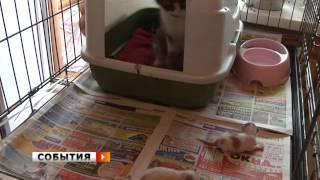 Котята нашли приемную маму в приюте «Твои друзья»