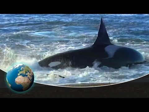 Patagonia: Coast of the killer whales