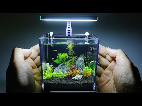 The World's Smallest Plant Aquarium #1