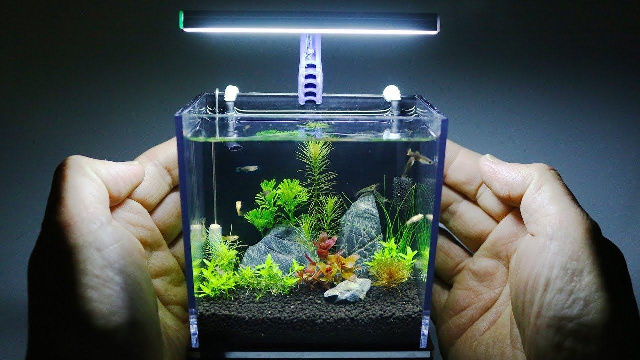 The World S Smallest Plant Aquarium 1 Youtube