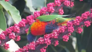 #2 Australia, Bird's own country- ബേർഡ്സ് ഓൺ കൺട്രി ഓസ്ട്രേലിയ !!