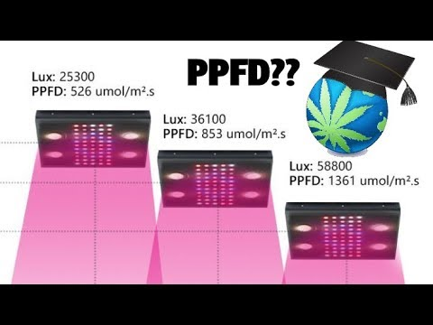 How Much PAR Do Cannabis Plants Need? - Understanding PPFD & PAR