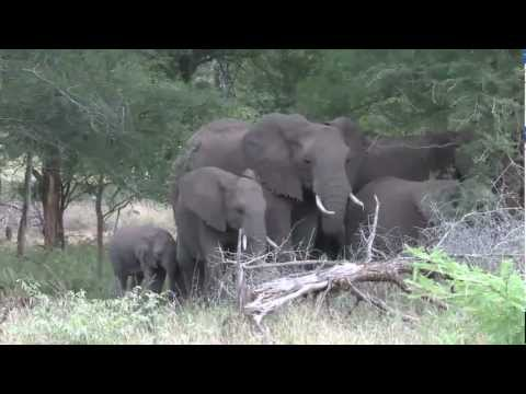 Elephant Immuno-Contraception in South Africa