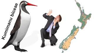 Гигантские пингвины и эволюция. Новые палеонтологические находки в мире животных Новой Зеландии