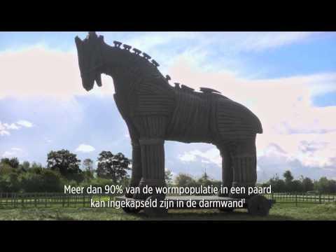 Is uw paard het Paard van Troje?