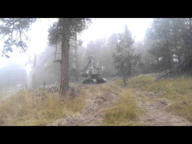 Mailloux Timber Company cutting large ponderosa pine with Timberpro 735c