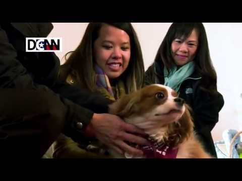Dallas nurse Nina Pham reunited with her dog, Bentley, after Ebola quarantine