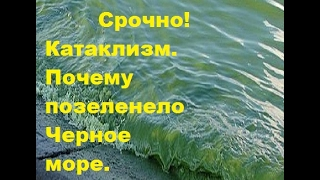 Срочно! Катаклизм. Почему позеленело Черное море. В Севастополе море окрасилось
