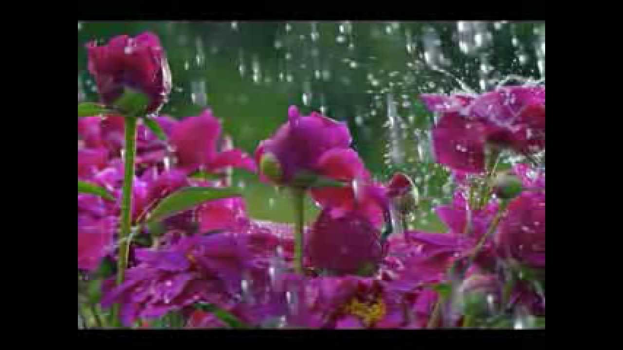 Красивая мелодия мелодия дождя скачать бесплатно
