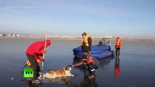 В Чите спасли застрявшую во льду собаку