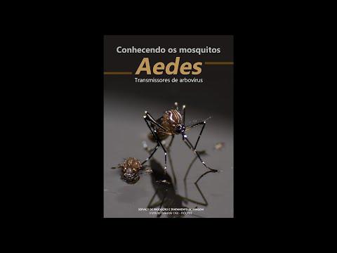 Conhecendo os mosquitos Aedes - Transmissores de arbovírus
