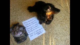 The Shaming Of The Dachshund