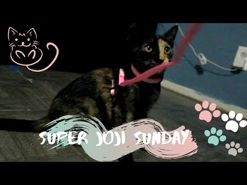 buying-my-kitten-a-harness-and-leash-#catwalk-||-superjojisunday