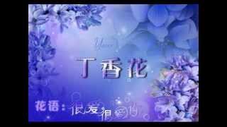 劉芳~丁香花
