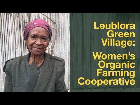 Women's Organic Farming Cooperative in Timor-Leste : Bella Galhos and Leublora Green Village