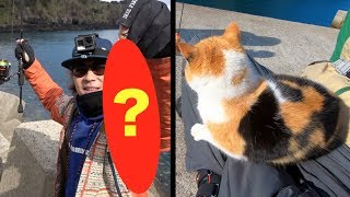 あの猫がいる釣り場で毎投釣れる!!珍しい魚も!