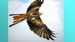 Класс Птицы 2.  Урок биологии.