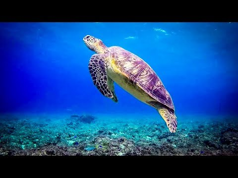 UNDERWATER | Focus Music with Binaural Beats and Electric Guitar, Concentration Music for Studying