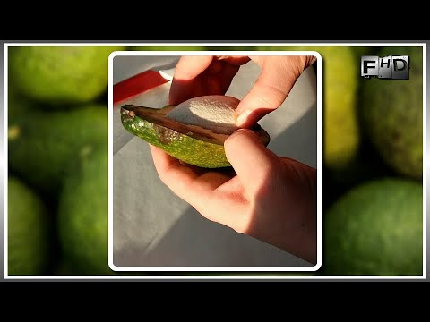 Как вырастить Авокадо из косточки в домашних условиях - (ч.1)