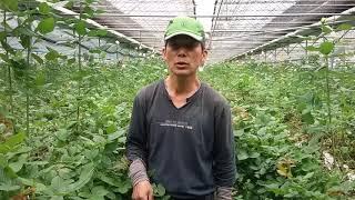 이장집 (119) 수경재배 - 장미 2