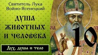 10/24 Душа животных и человека. Часть 1. Лука Войно-Ясенецкий.