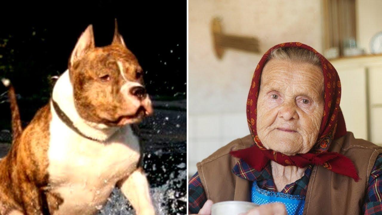 عجوز ربت كلب بيتبول.. وبعد أسابيع سمع الجيران صراخ في منزلها !!