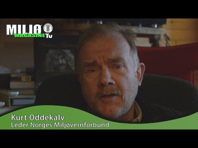 Miljømagasinet TV Kurt Oddekalv: Flott at Sylvi Listhaug tar over for Freiberg i OED