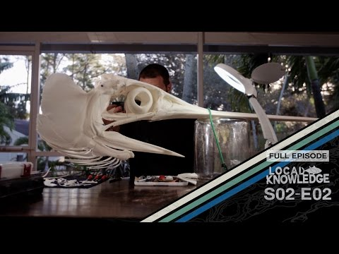 Swordfish Mount By Taxidermy Expert Dave Kustra - S02 E02 Dakus Bones