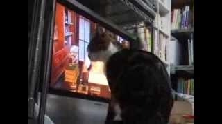 2008年9月 急に猫がテレビを叩くなるようになった 何が気になるのか 草...