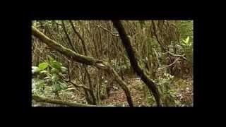 Тенерифе (уникальная природа)(Канарские острова - элитный мировой курорт, мировое наследие ЮНЕСКО уникальная природа, одна из лучших..., 2012-03-10T10:13:38.000Z)