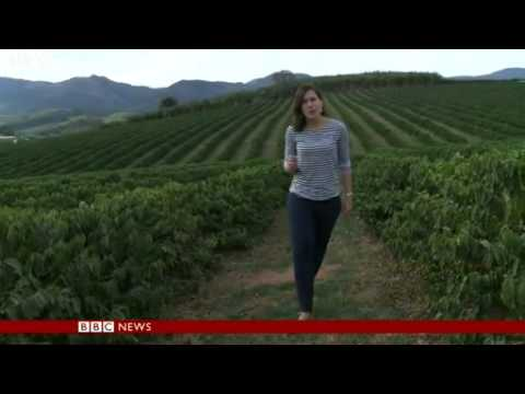 BBC News   Brazilian drought affecting coffee industry