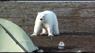 Safer in polar bear areas