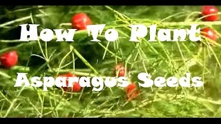 Plant Asparagus seeds in the fall, and have Asparagus seedlings in the spring!