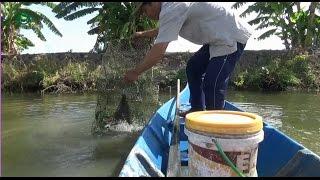 Bẫy tôm bắt được con cua chúa - Shrimp trap   Sắc Màu VN